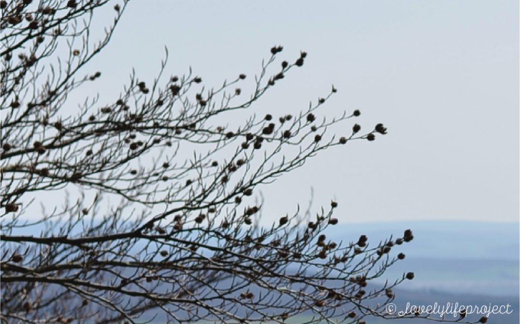 Ein sagenumwobener Kraftort: <br>Der Hohenstein im Weserbergland