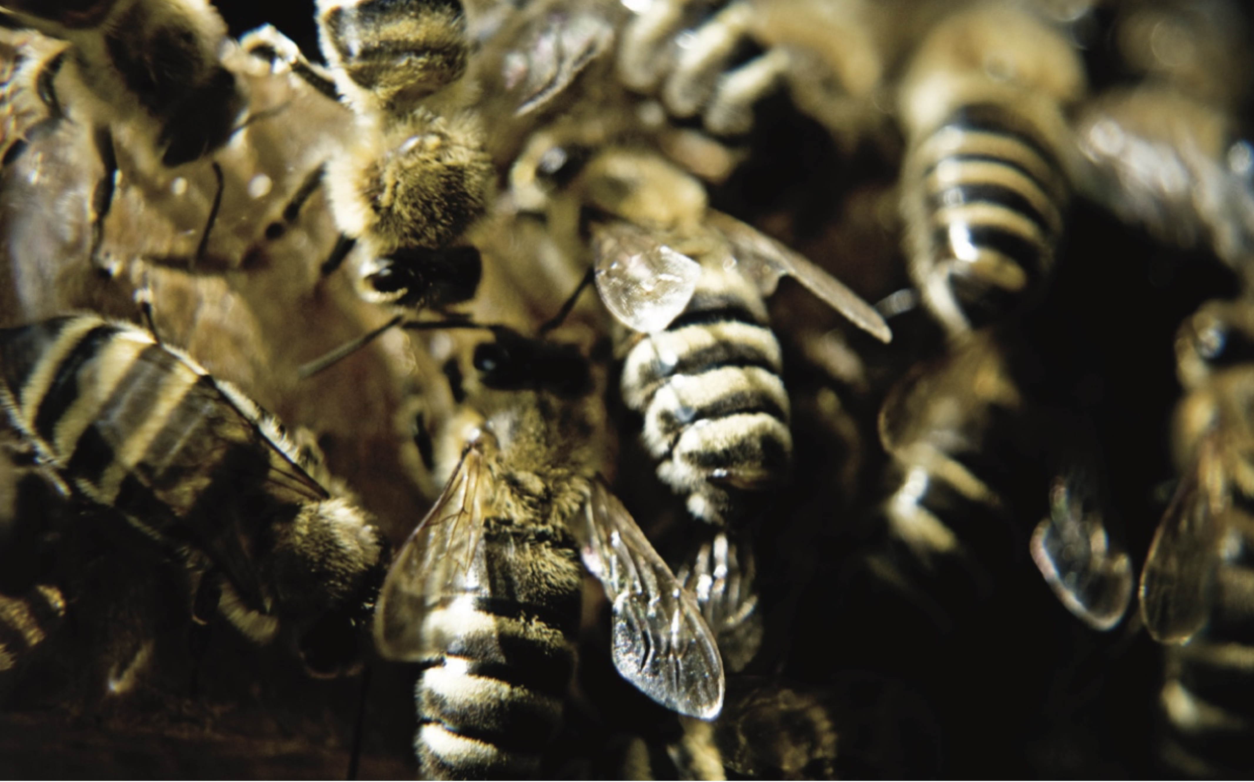 Just Bee - Die Botschaft der Biene